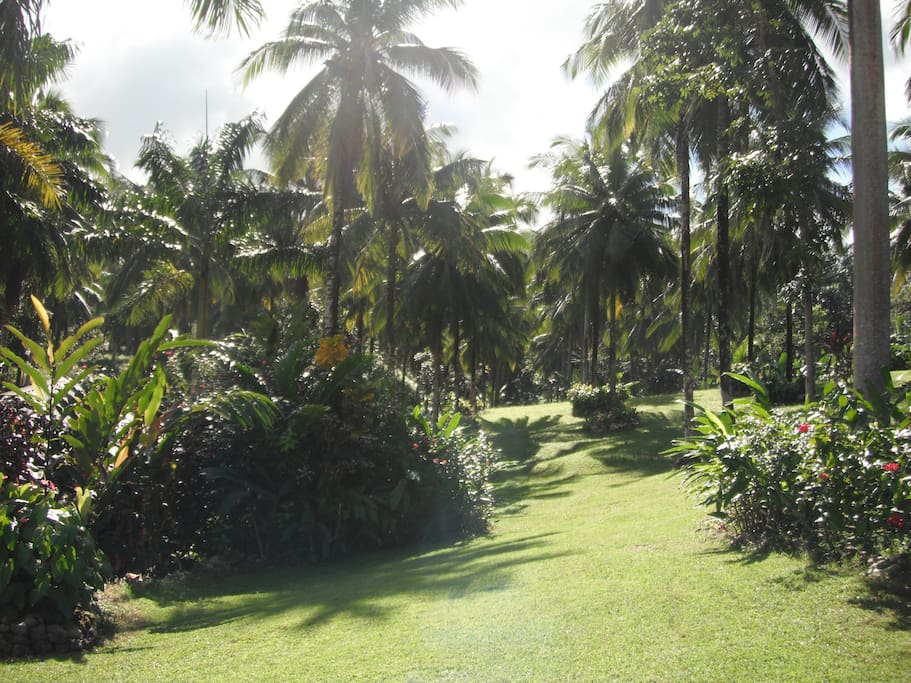 View of the 10 acres of tropical gardens surrounding the home.