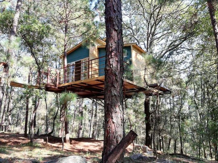 Pinochueco casa del árbol azul