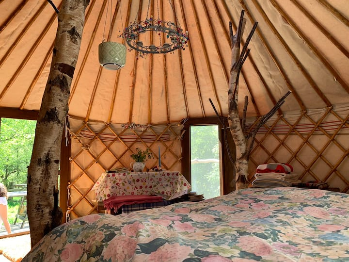 Brock Yurt, surrounded by nature and stars above
