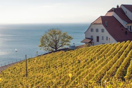 Le vignoble de Lavaux - Lutry