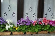 Spring window