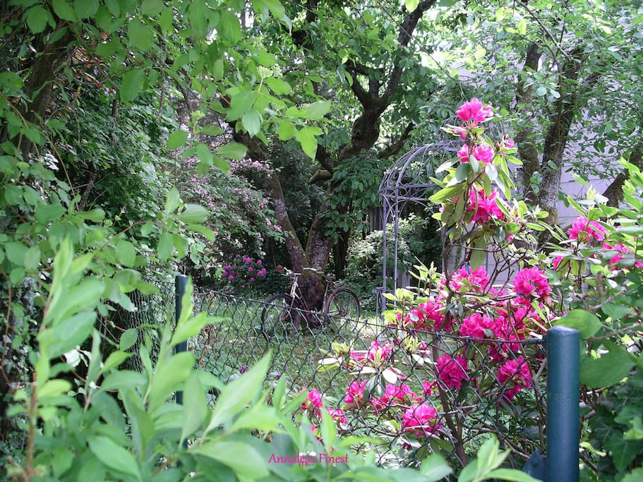 View from my garden into the neighbor's garden...you'll see more from mine when you click...