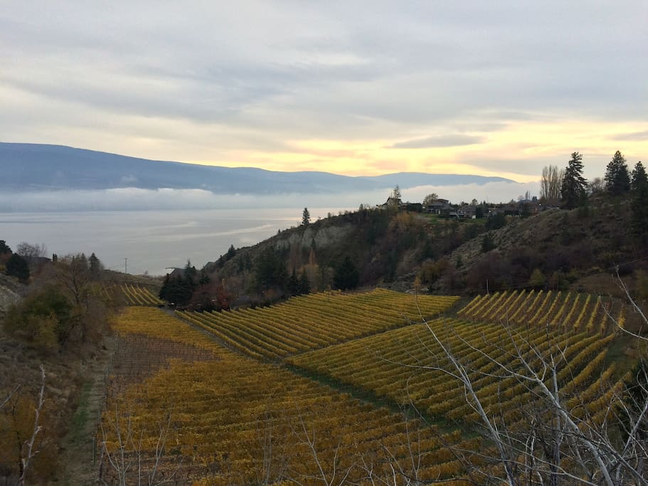 View in fall of vineyards from Solly Rd - walking trail