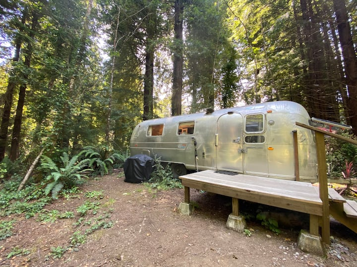 Silver Dream in the Redwoods