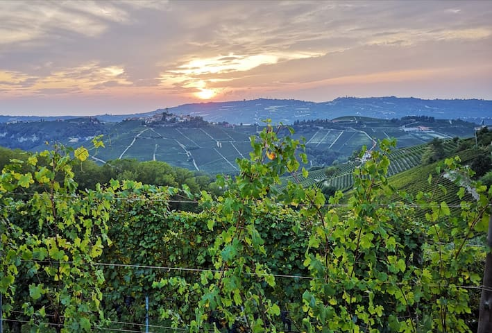 Il Piccolo Vigneto - The Small Vineyard