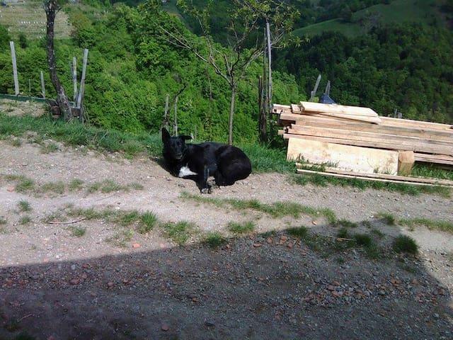 Small goat farm, pet friendly - Sedlašek - Cabin