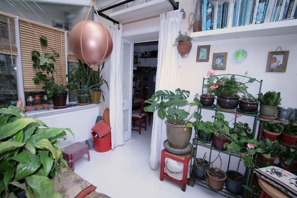 Conservatory/yoga room