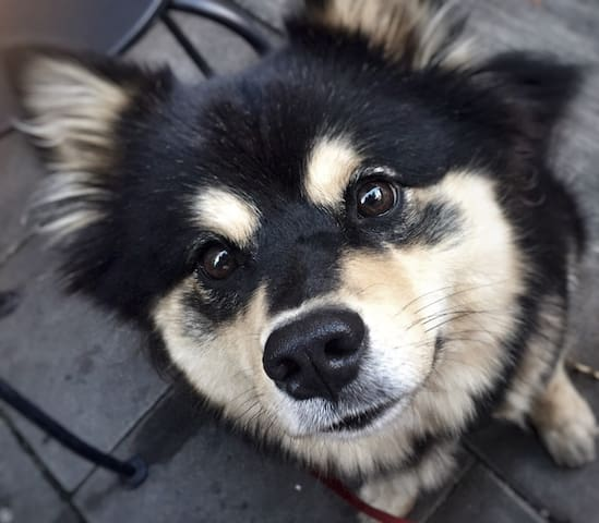 """Say hello to my dog Zelda!!! ❤️ This is her """"I can eat that ice cream better and faster than you and also I need it more and come on can't you see how cute I am And I deserve it more now give it to me already"""" eyes..."""