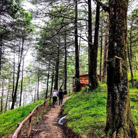 Cabaña de Madera en el Bosque Pinal de Amoles.