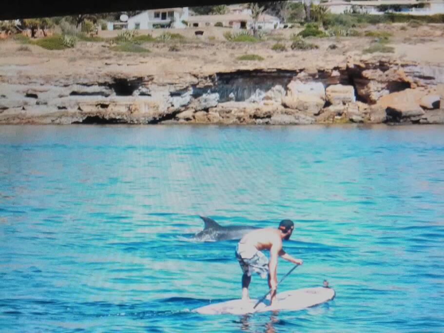 Stand up na luz beach com golfinhos