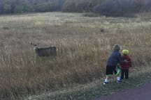 These are my boys up close and personal with a doe in Rox Park.