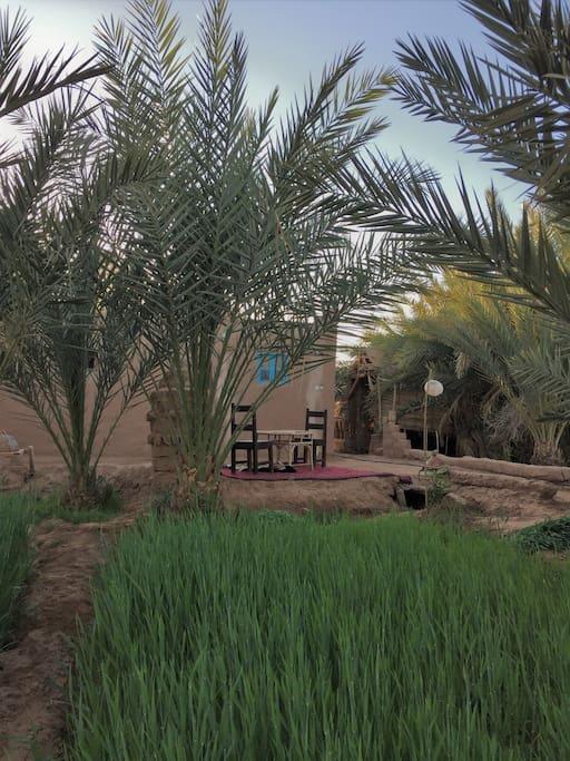 Jardin de l'auberge (blé pour les chevres)