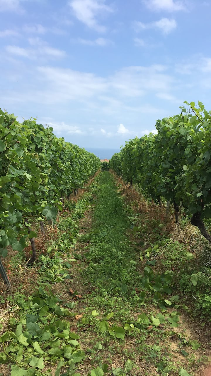 Come and walk through the vineyards.