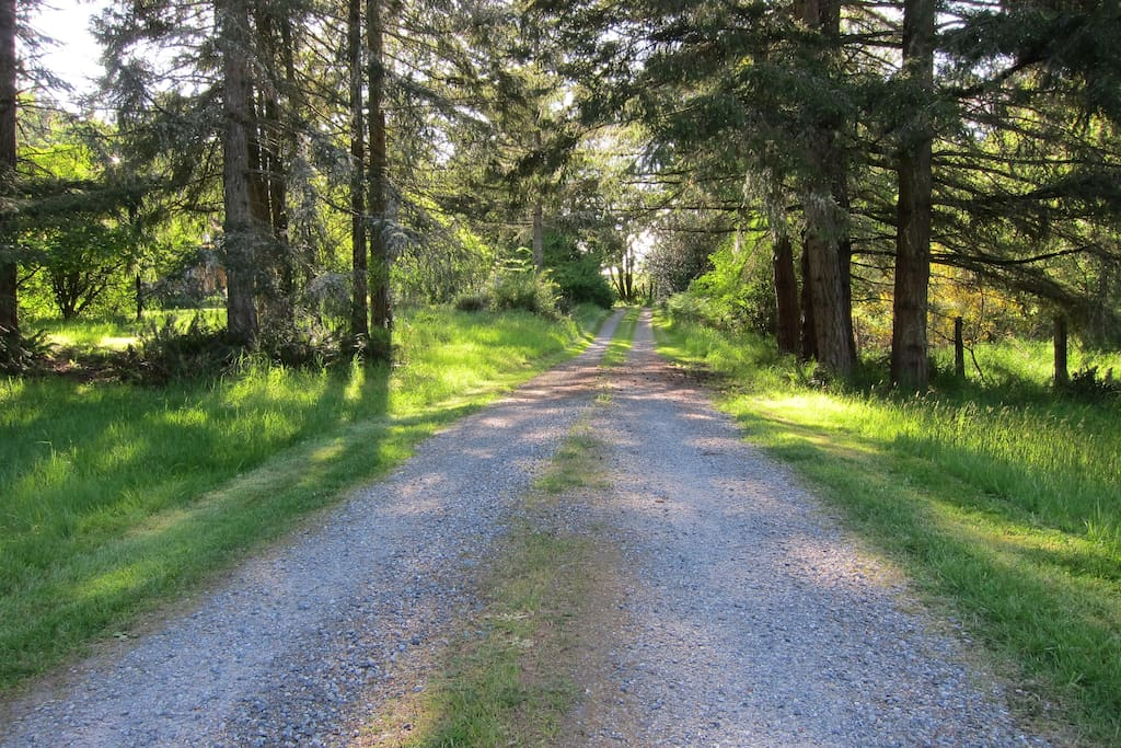 Driveway to a little peace and quiet...