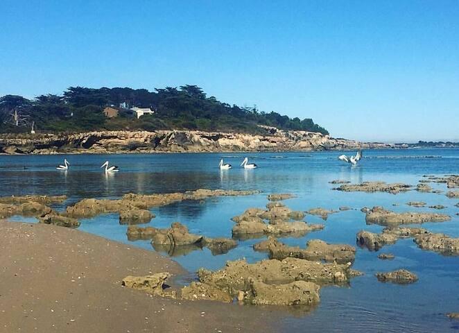 Guichen Bay