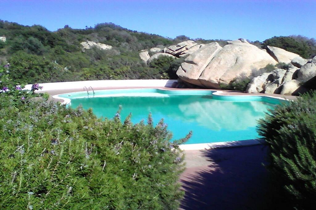 Grande piscine environnement typique
