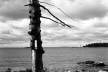 Guest, Karl Van Hiel's photo of the oceanfront (Oct 19)
