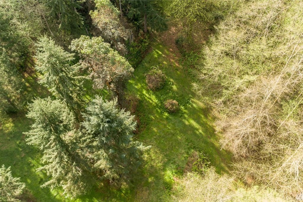 Ariel view of your private forest.