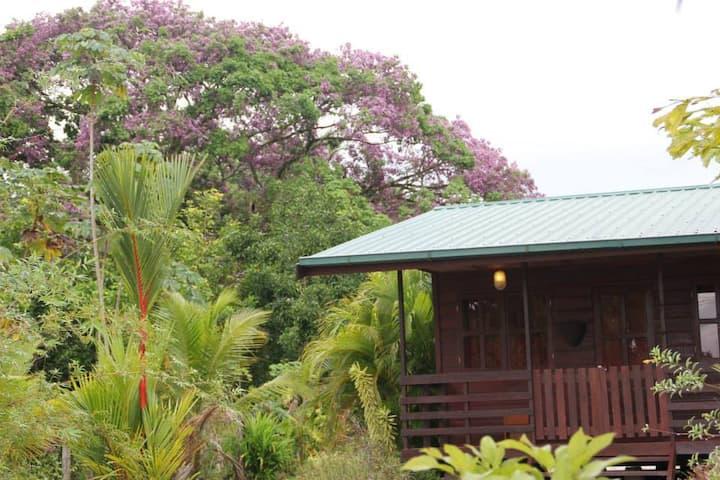 Vakantiewoning Coconut te Lelydorp Suriname