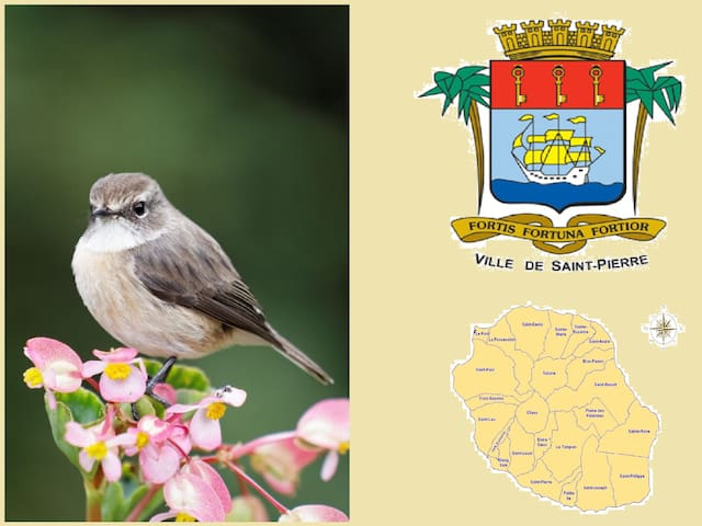 Tec-Tec (small endemic bird of Reunion Island) - Ravine des Cabris - House