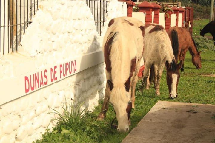 Dunas de Pupuya Hostel (3 singles)