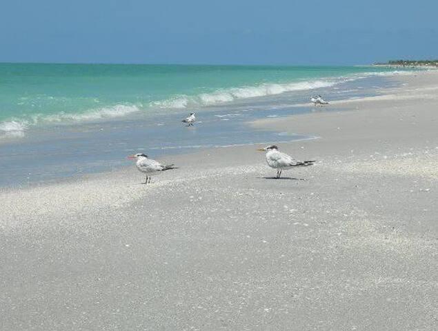 Bowman's Beach.