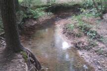 Creek along one of our trails.