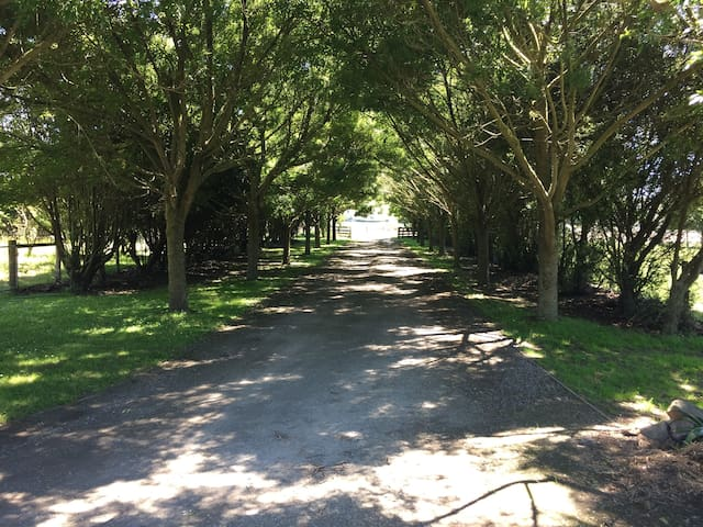 Driveway to our property with plenty of parking space.