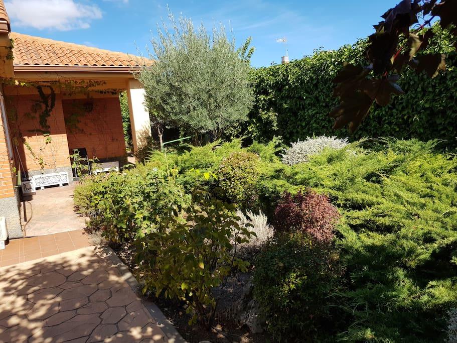 jardin con plantas aromáticas y muro vegetal del perímetro de la vivienda