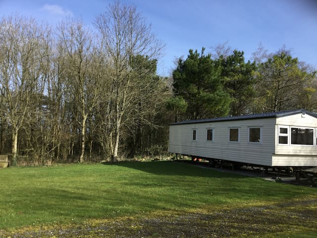 Woodland Retreat - Beechwood - Devon - Other
