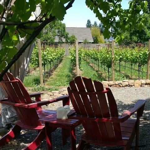 Vineyard Farmhouse-Wine-Bikes-Donkey-Robes-Plaza