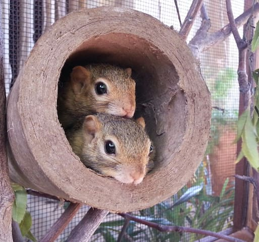 Sabines squirrel nursery and hospital.