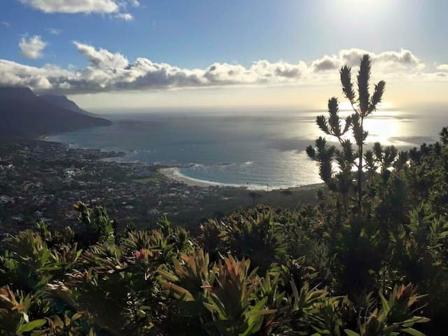 views from the Lions Head walking path in the nature reserve above Camp Bay