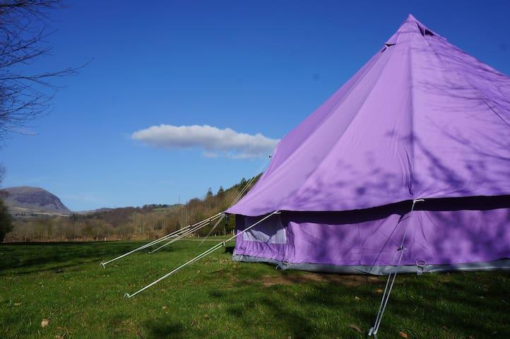 Furnished bell tent on campsite - Blaenau Ffestiniog - Tent