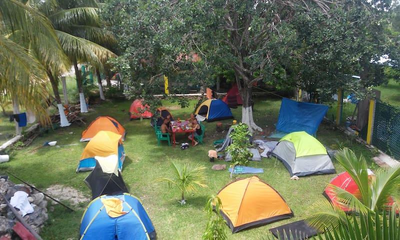 Camping Arbol de la Vida