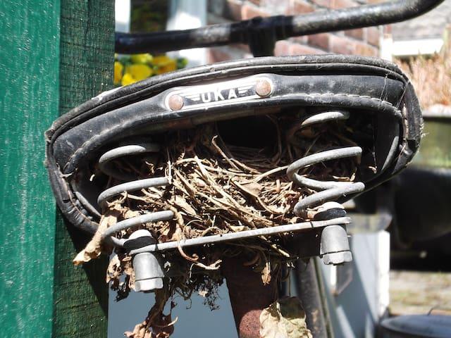 Tot onze verrassing was het oude zadel een keer in gebruik genomen door een vogeltje!
