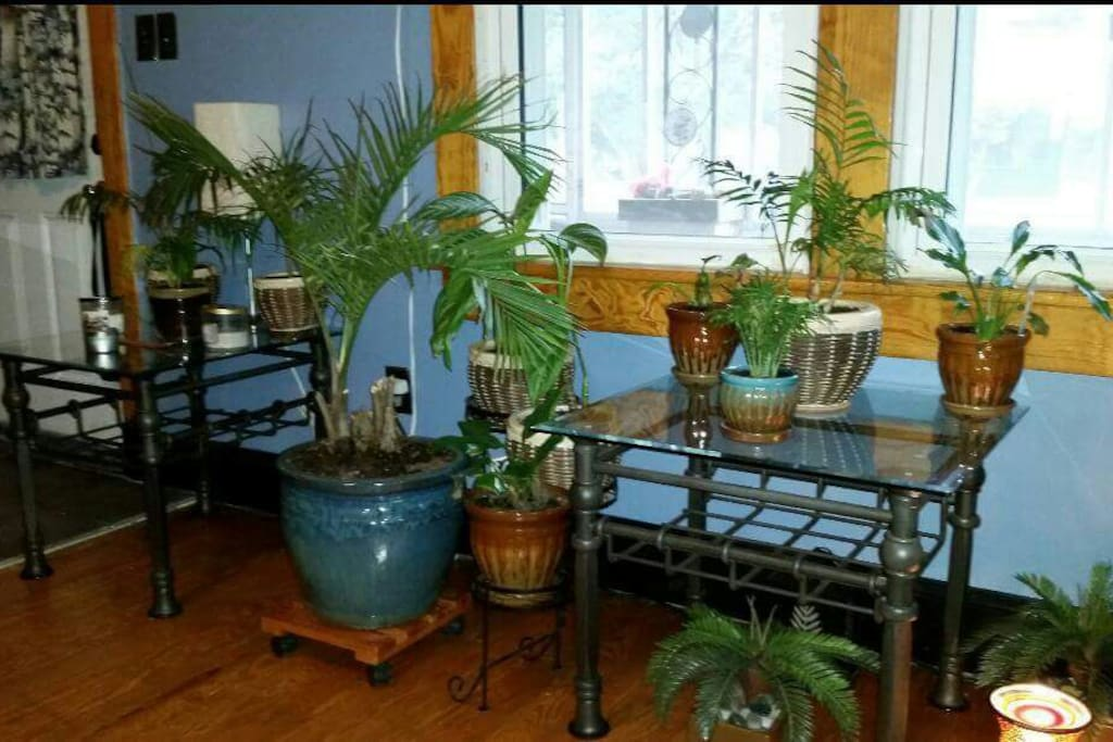 Living room. Peaceful & serene. Lots of plants.