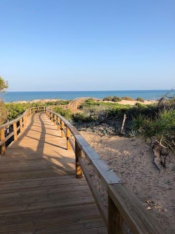 Petit chemin pour accéder a la plage, en traversant une jolie pinède. Chemin sécurisé pour les enfants.