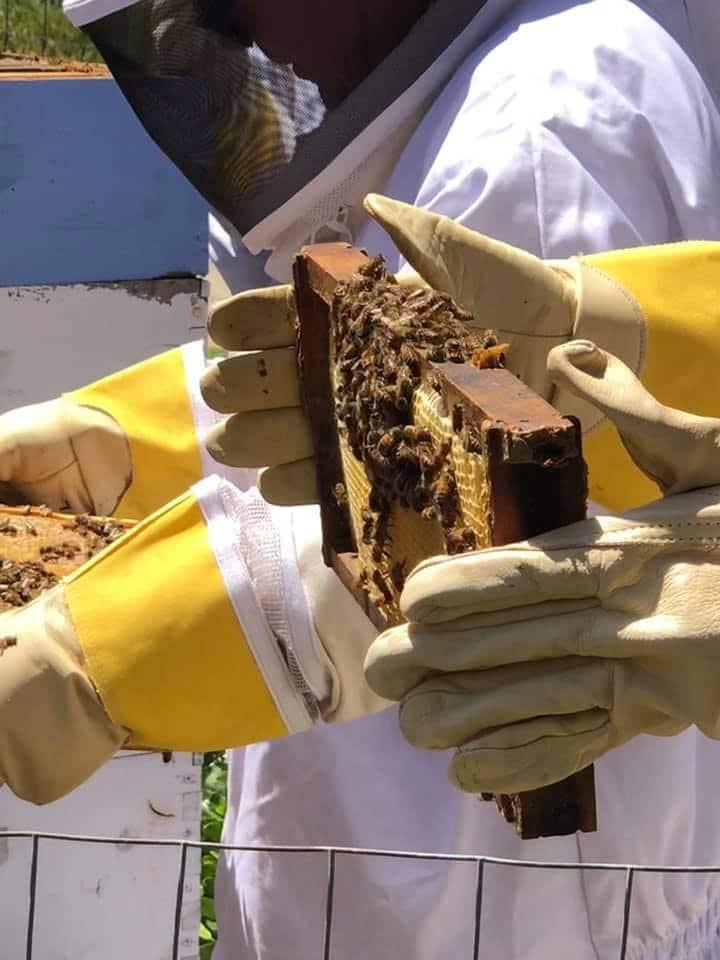 Yowza! Bees!