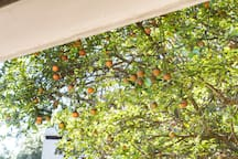 Right outside your window there is a Tangerine tree. In season pick your oranges and make your own fresh morning OJ.