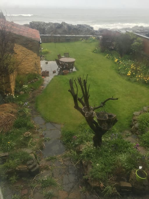 The garden in the beautiful Scottish rain!