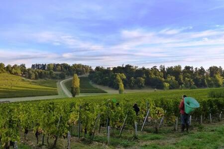 Dormir au milieu des vignes au cœur de St Émilion
