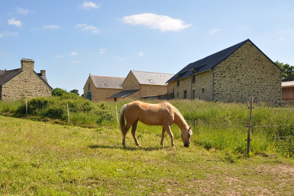 Les chevaux à proximité