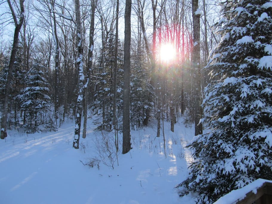 Back yard and snowshoe trails