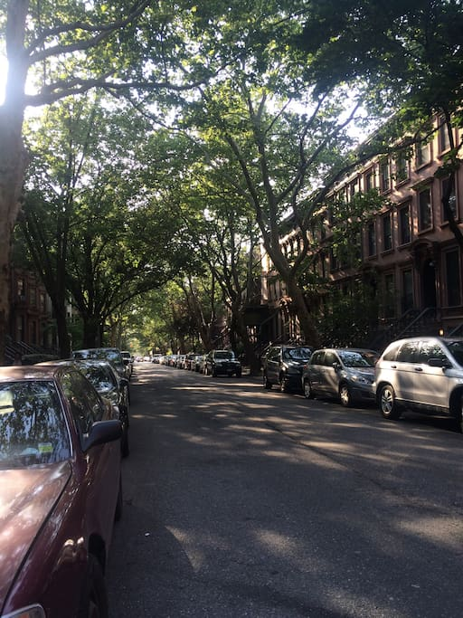 Tree-lined block