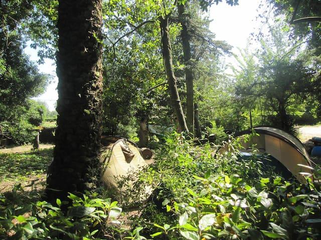 Acampar na floresta centenária