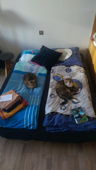 Your bed, our cats :-)