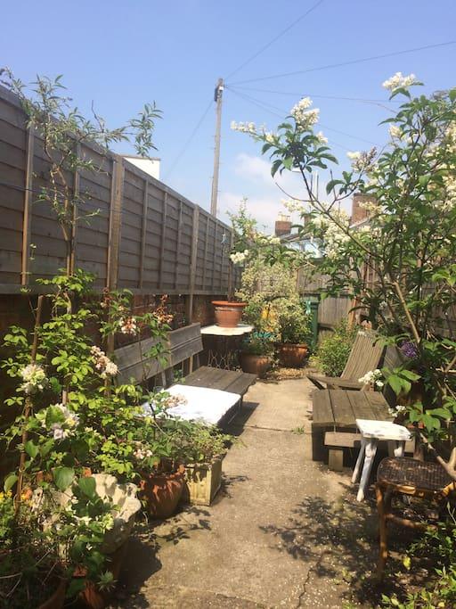 Lovely sunny back patio garden