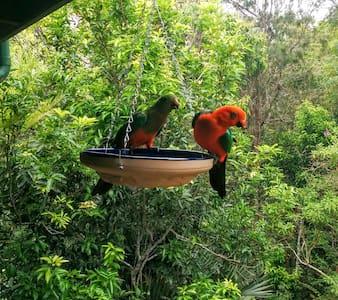 Birdsong BnB - Barrine