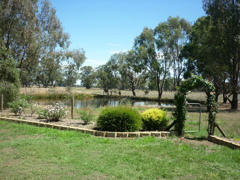 View of front garden with dam  and wild birds